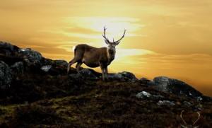 Deer Forrest pic